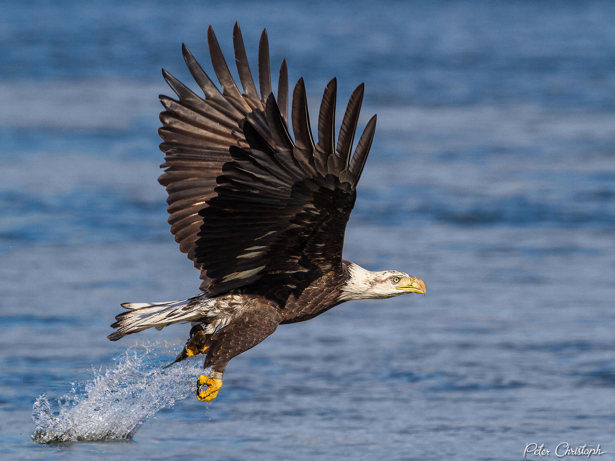 eagle horiz conowingo 2048